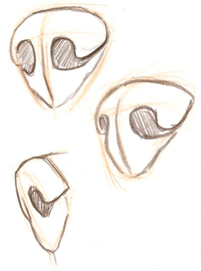 Observe the change in the shape of the far nostril. Because it faces away from the viewer, it will appear more eliptical in a 3/4 view.