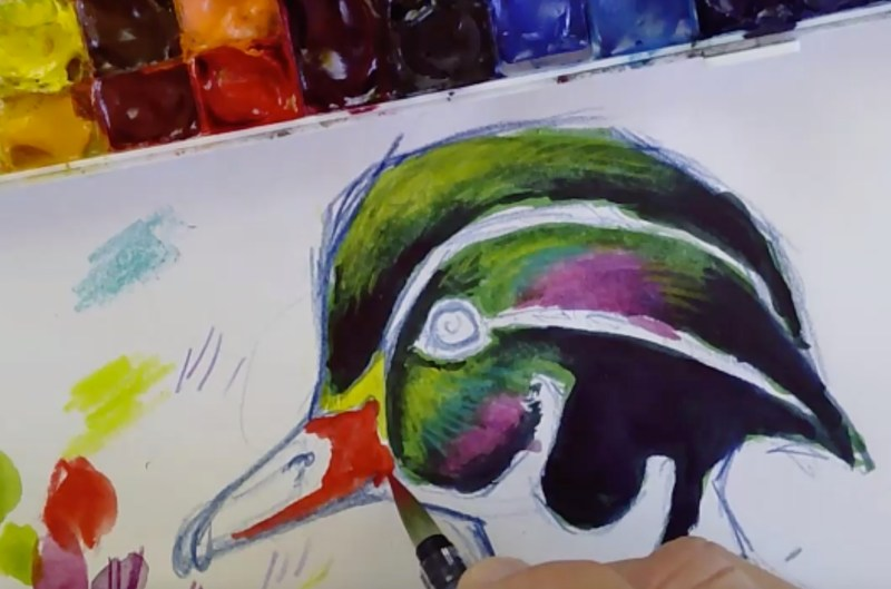 Iridescence- How to draw the Wood Duck's Head (video)
