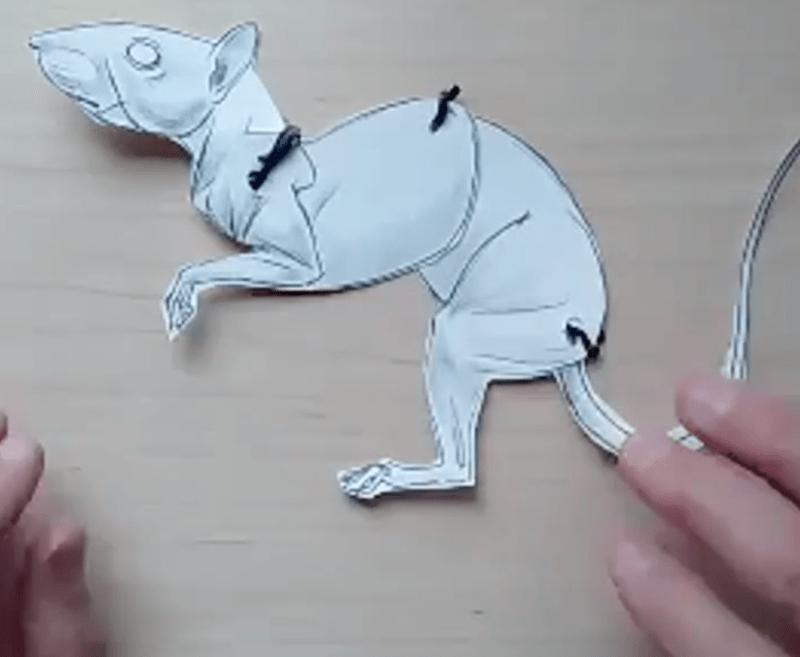 How to Draw Squirrels (video)