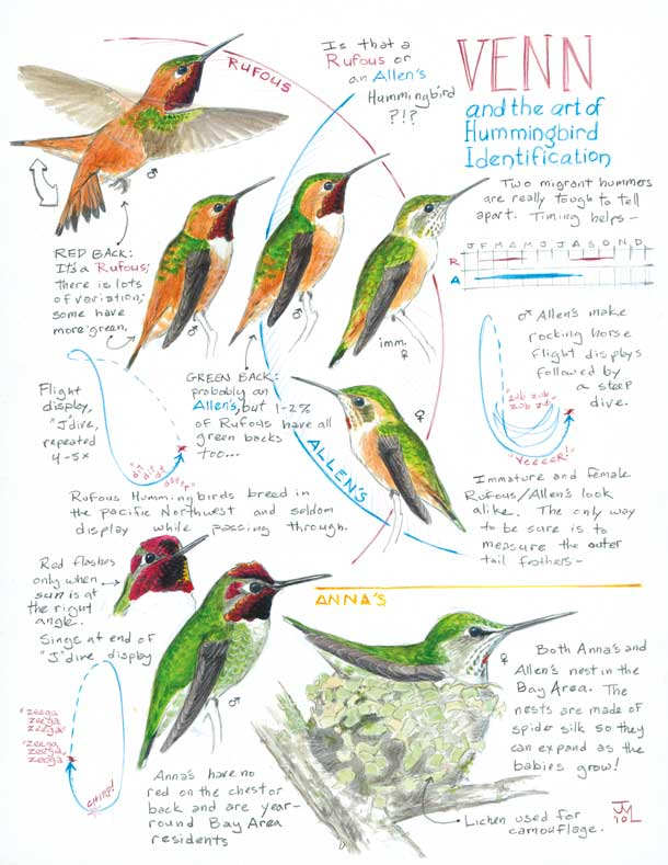 Drawing Hummingbirds and Conversation with Maria Coryell-Martin (video)