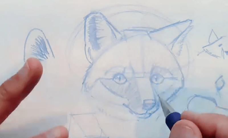 How to draw the Gray Fox