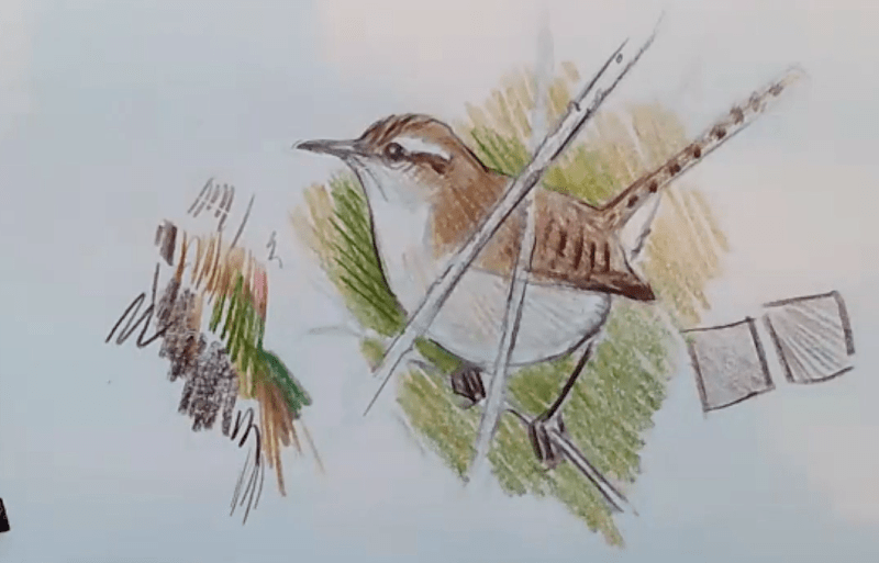Tally marks, Colored Pencil Wren, and Gull on Toned Paper