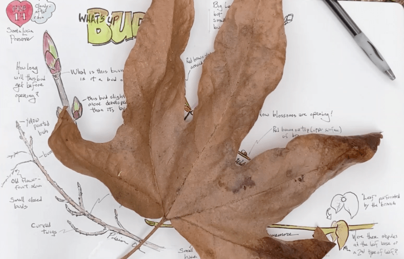 NJC, Episode 23: Make your own Nature Collection