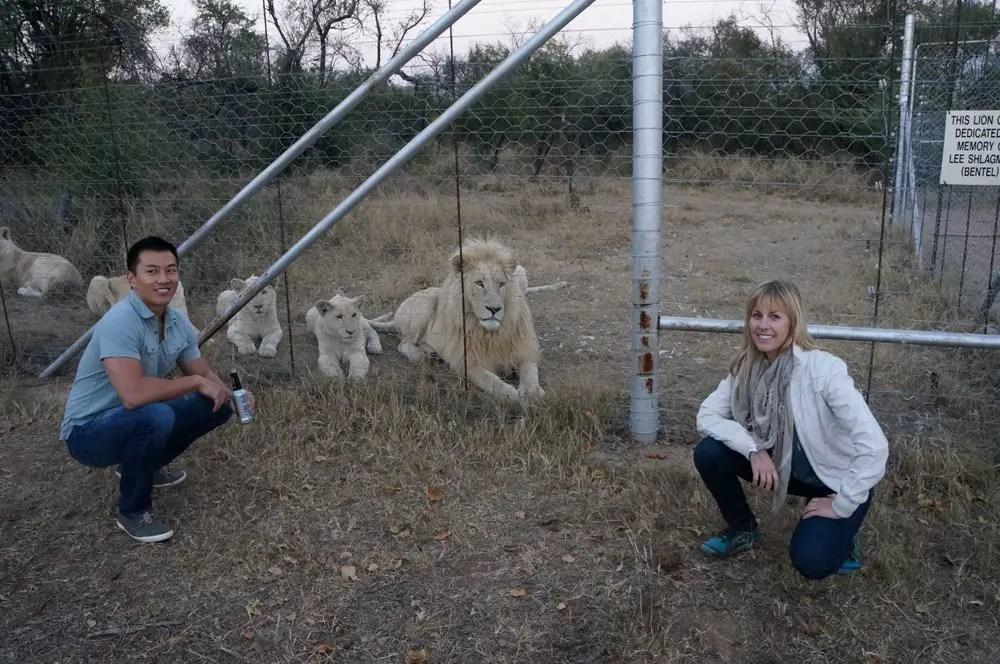 The wild white lions