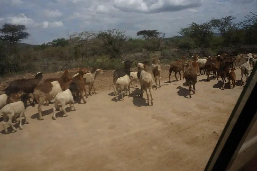 masai mara drive road