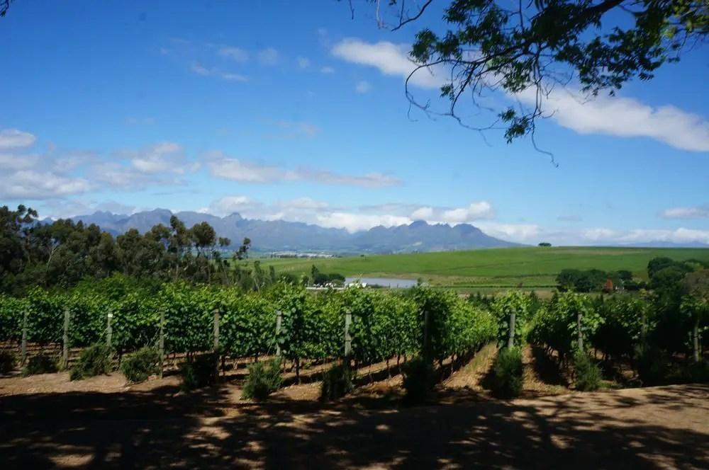Beautiful winelands in Franschhoek.