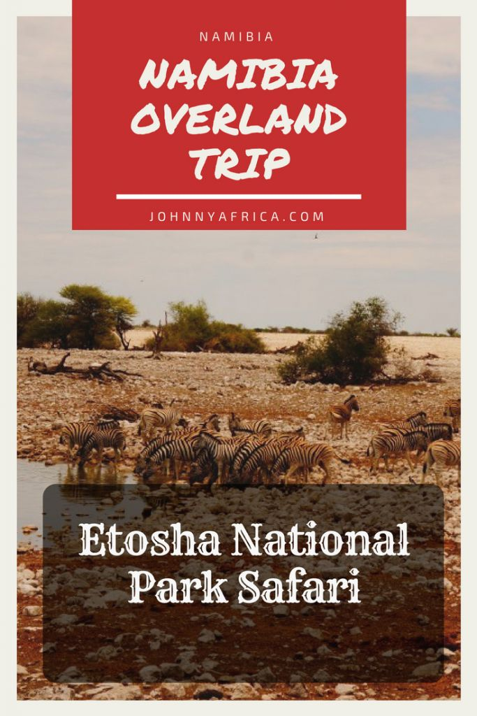 Nearing the end of my overland adventure starting in Cape Town with Nomad tours, we stopped in the Etosha national park, Namibia\'s biggest and most diverse game reserve. #safari #namibia #etosha #windhoek #gamedrive