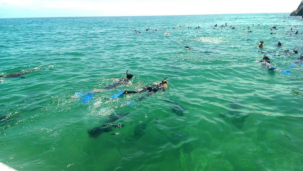 seal snorkeling plettenberg bay