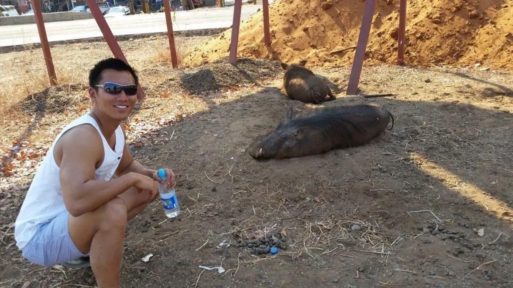 warthog in kasane botswana