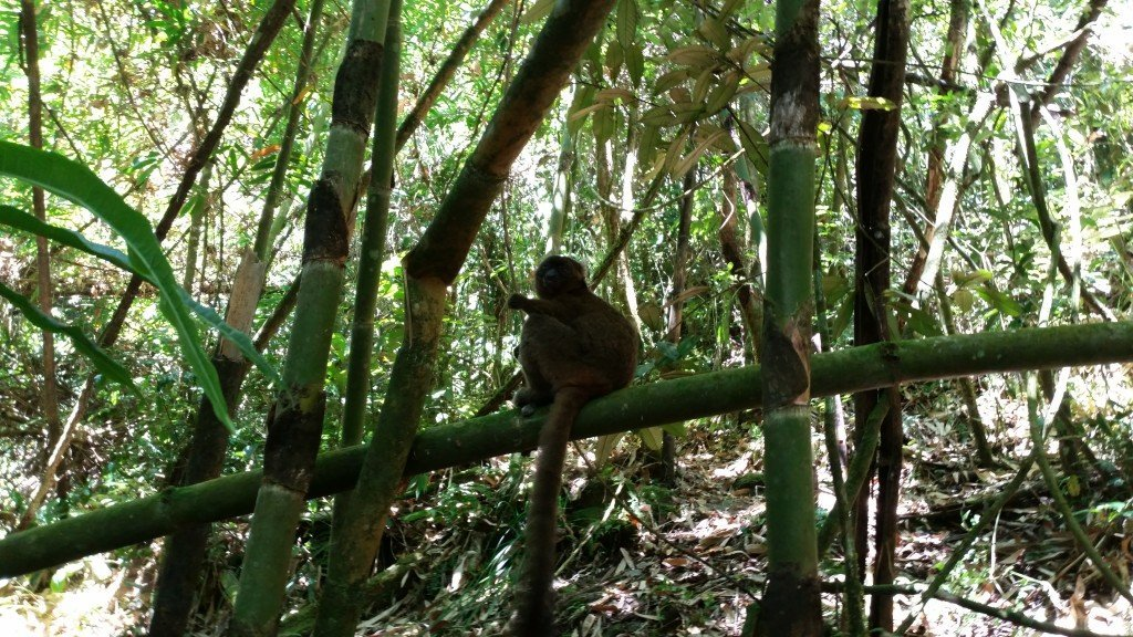 An awesome bamboo lemur not scared to get close to us. The guide gave it some bamboo bark and it stood there eating it in front of us for at least 10 minutes.