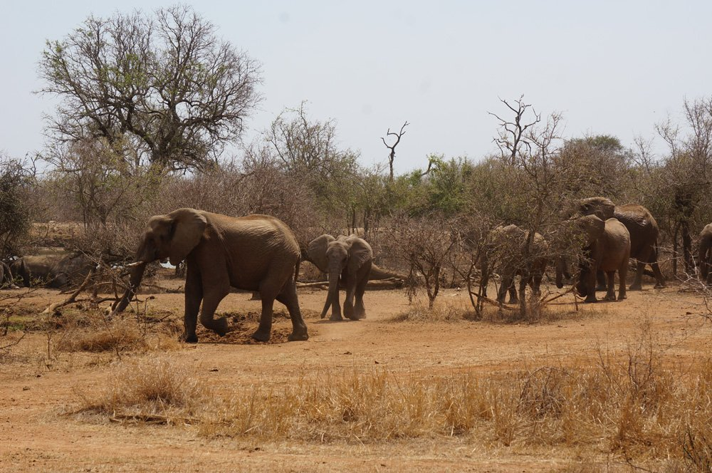 Elephants decided to come later and join the watering hole party.