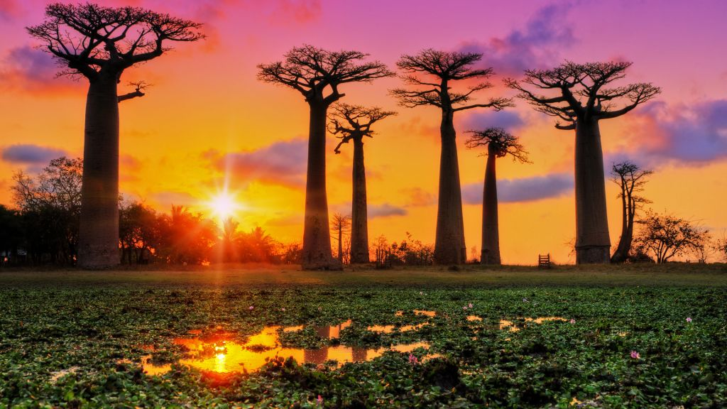 baobabs sunset avenue of the baobabs madagascar