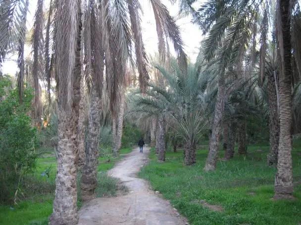 Walking through the palmeraie