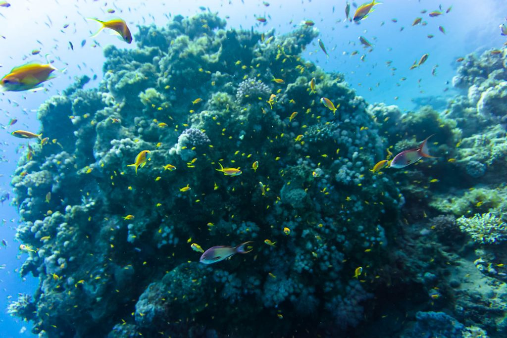 Dahab diving sharm el sheikh