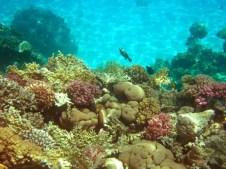 Sharm Diving