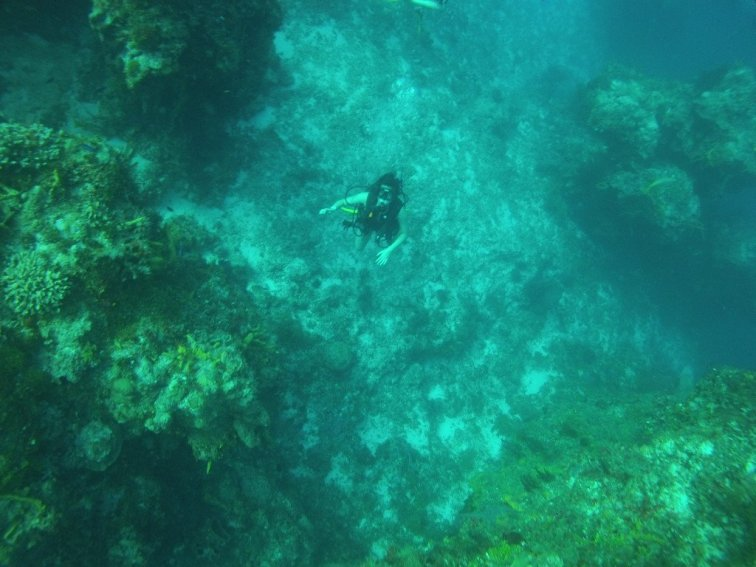 Diving in Cozumel