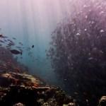 Sipadan diving
