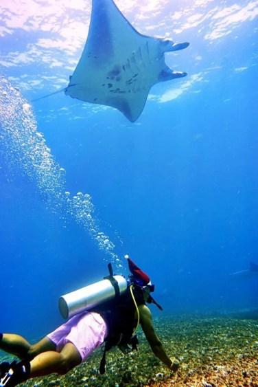 diving mantas komodo indonesia christmas