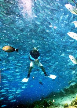 jackfish sipadan malaysia diving