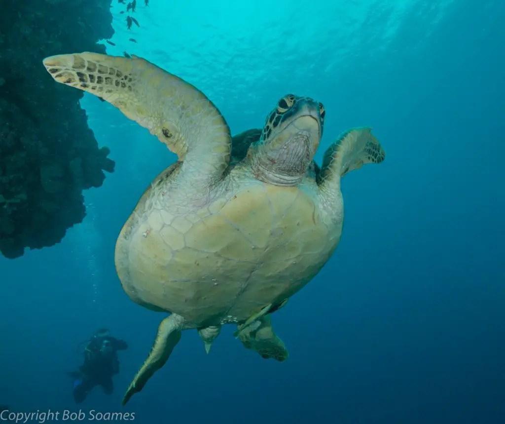 turtle pescador island