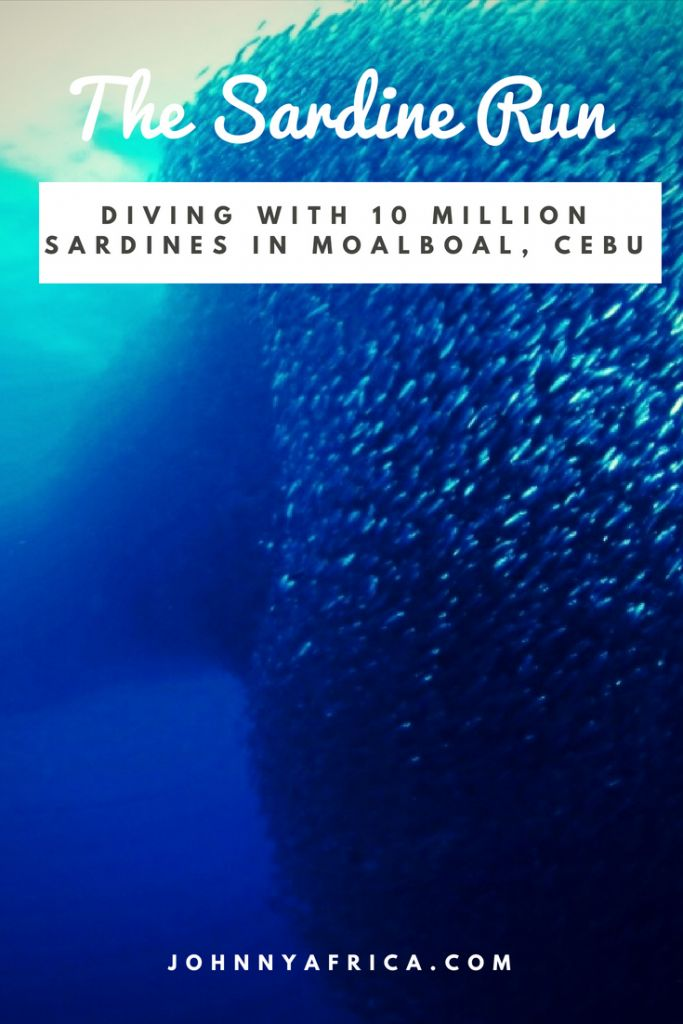 Located in Cebu\'s southwest is the beach town of Moalboal. It\'s home to millions and millions of sardines that call its beach shore home, and makes for one of the most epic dives you can imagine. #scubadiving #philippines #cebu #moalboal #sardines #sardinerun #divingwithsardines