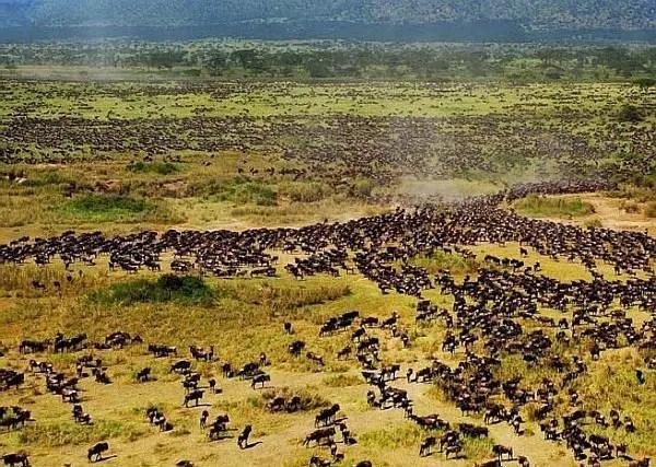 Elewana Flying Safari