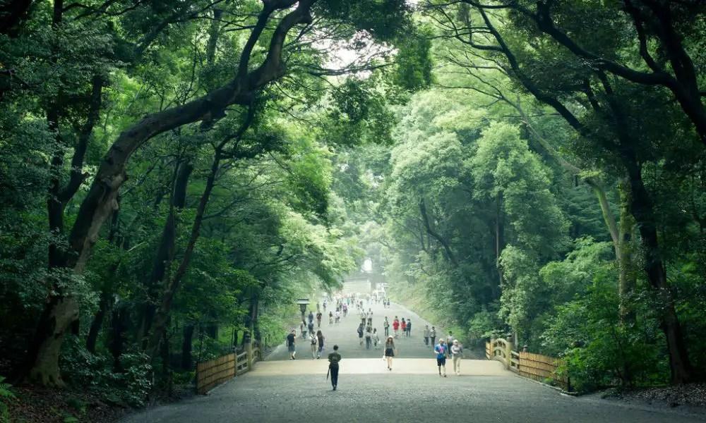 Meiji jingu forest tokyo