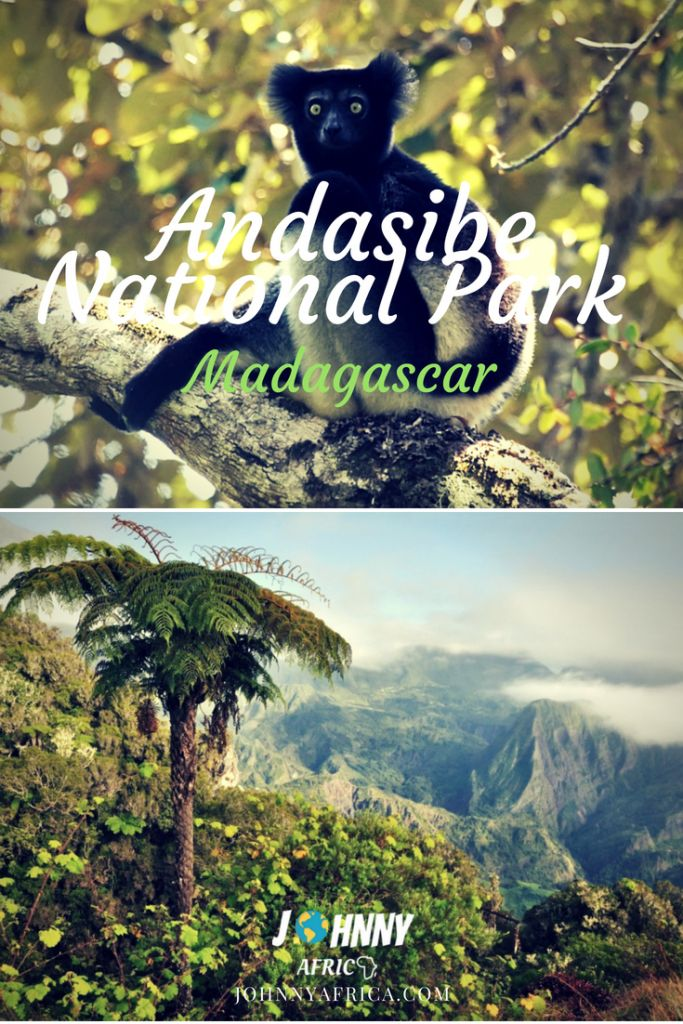 Andasibe is perhaps Madagascar's most visited National Park. It is a beautiful natural wonder that is home for the Indri, Madagascar's largest lemur's species. Standing at 1m, this is twice the size of the next largest lemur and is a sight to behold when visiting! #madagascar #andasibe #lemurs #hiking