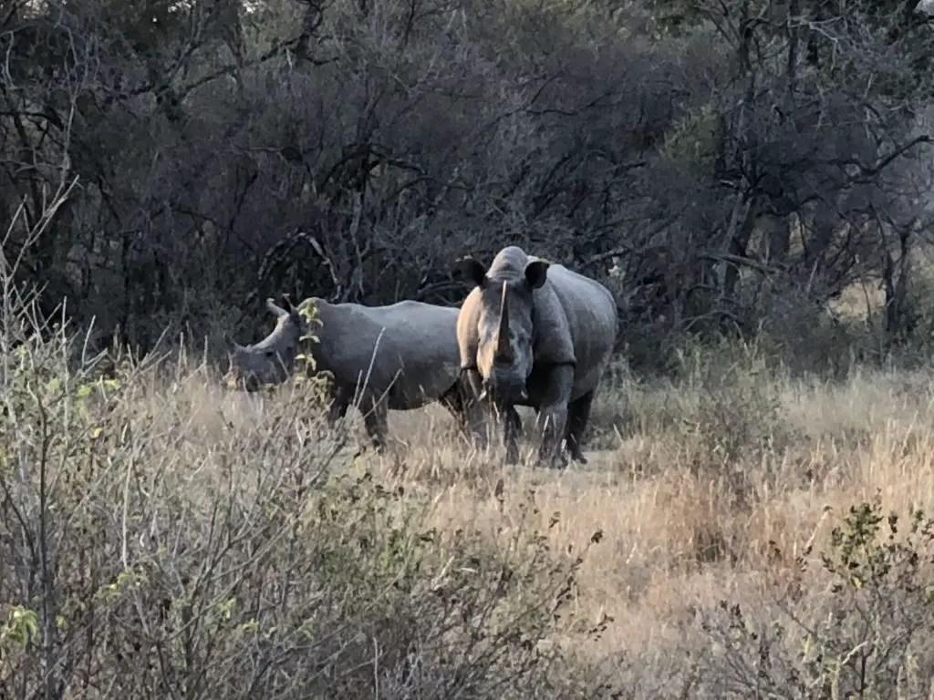 Rhino mhondoro