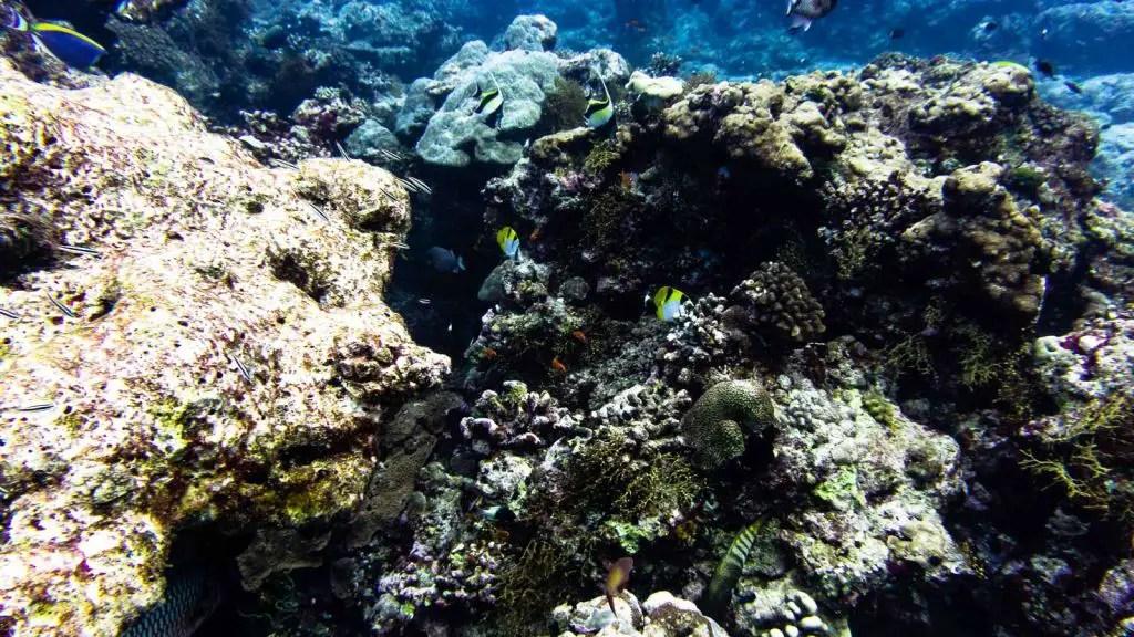 Velassaru Caves Maldives scuba diving
