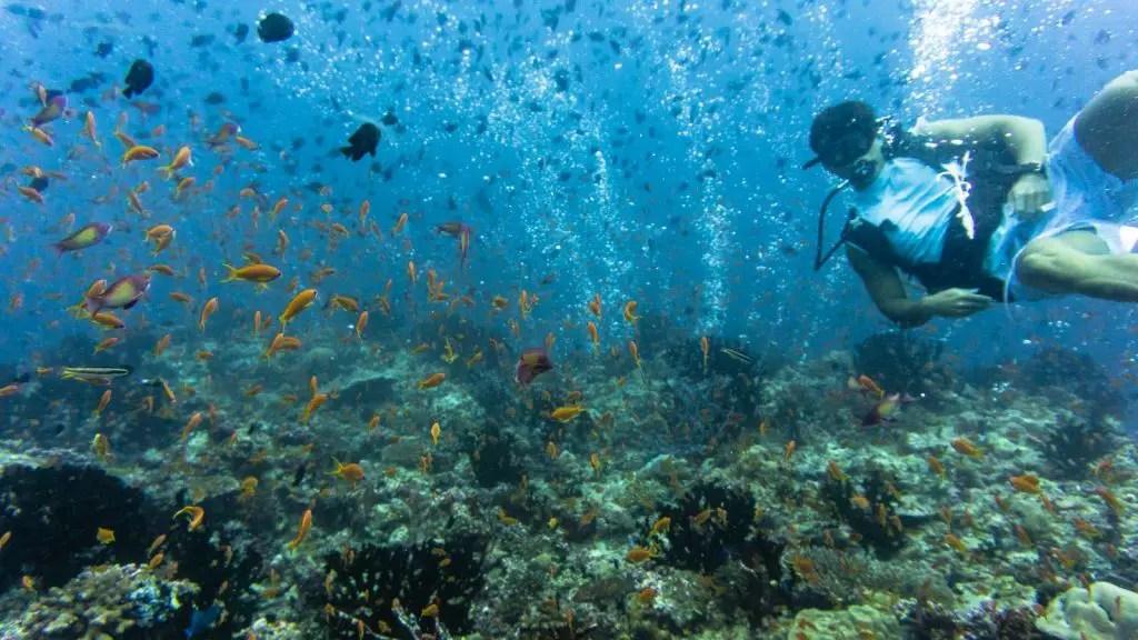 five rocks maldives scuba diving
