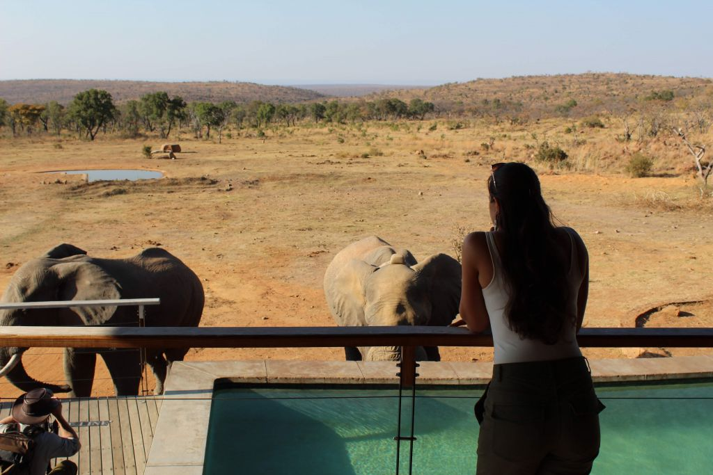 mhondoro safari elephants by the pool