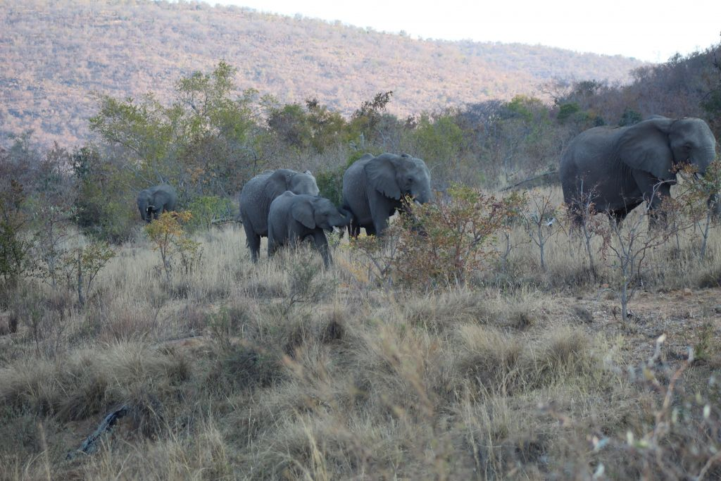 We saw a bunch of elephants too