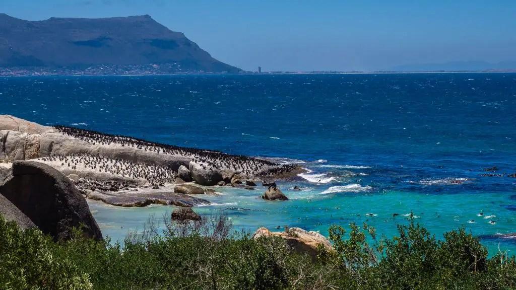 Boulder's Beach Penguins Cape Town Cape Point