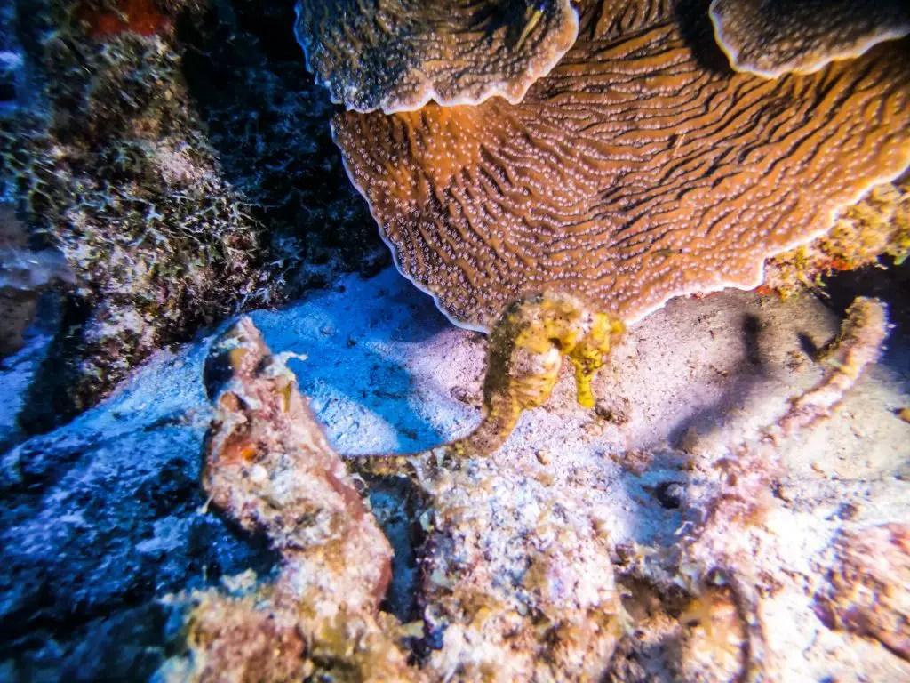seahorse bonaire diving