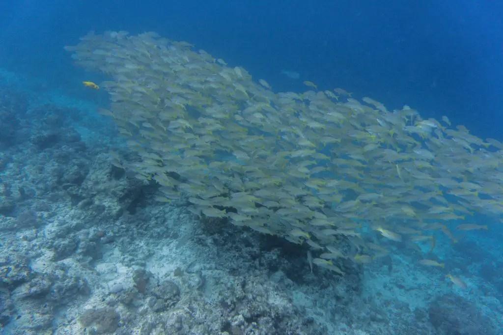 Mnemba Atoll diving