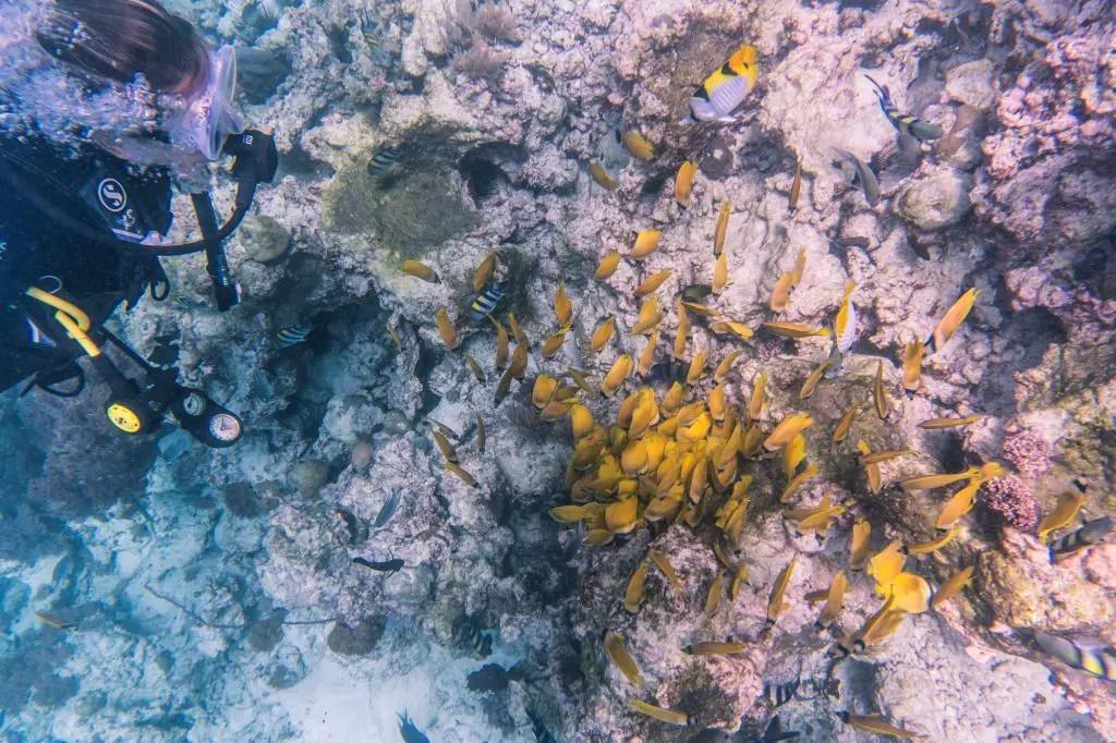 Mnemba Island Diving
