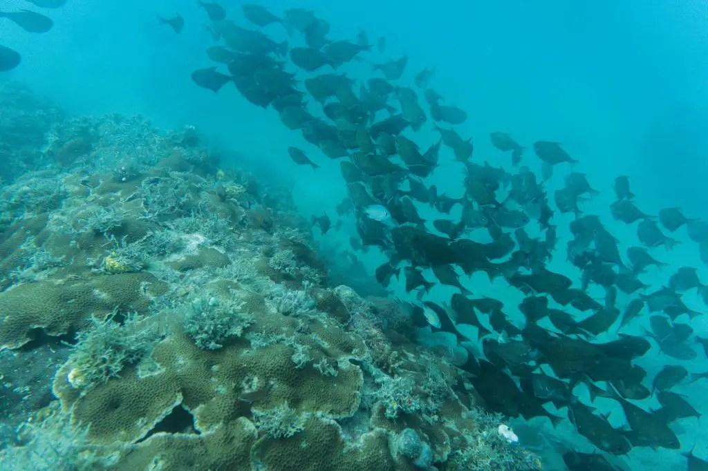 scuba diving tumbatu island