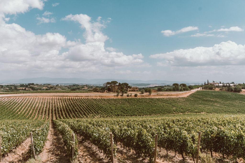 Tuscany vineyards views