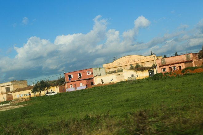 Gamla vingårdar i norra Algeriet. Foto: Johnny Friskilä