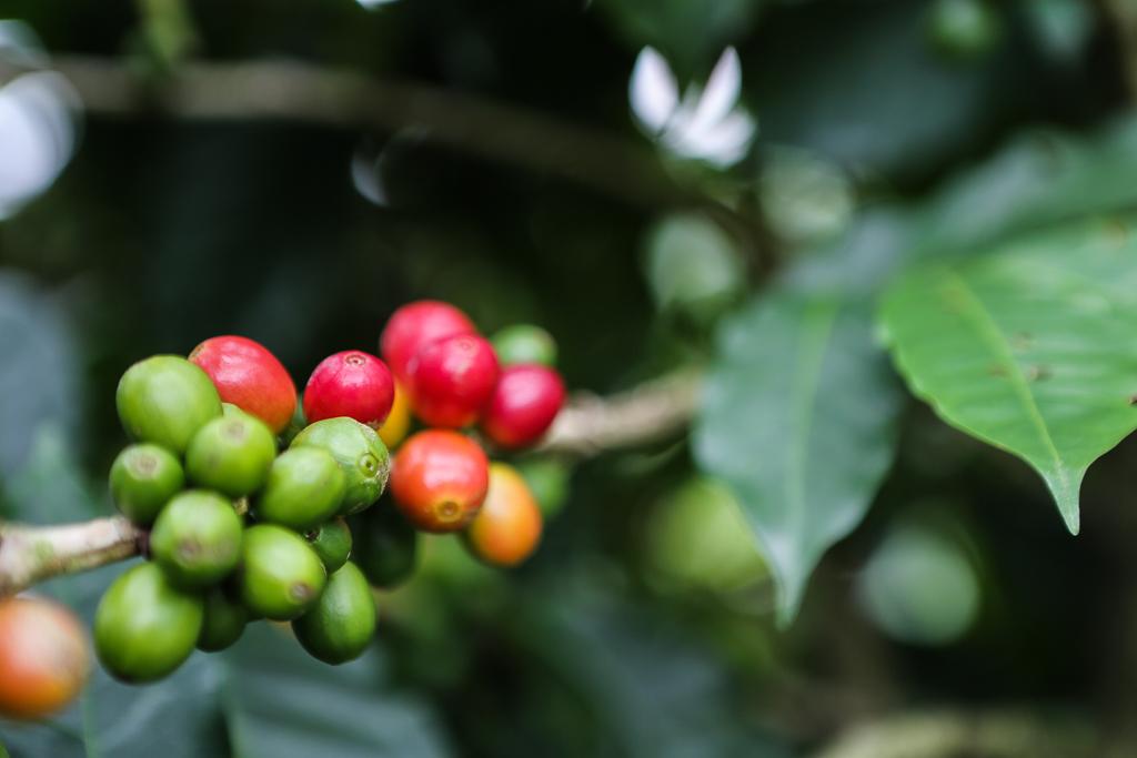 Best of Costa Rica-4