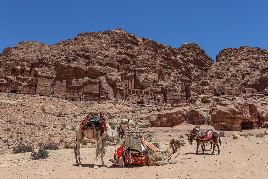 Camels-Petra-Jordan-6125
