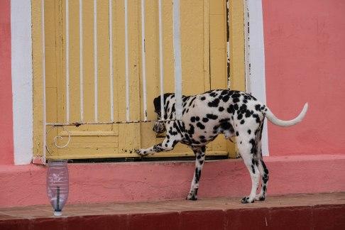 Trinidad_Cuba_Kuba_29