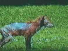 Baltimore creature 02