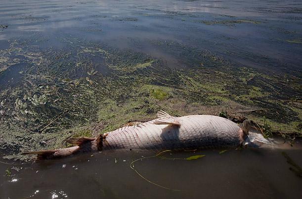 Gulf oil spill victim