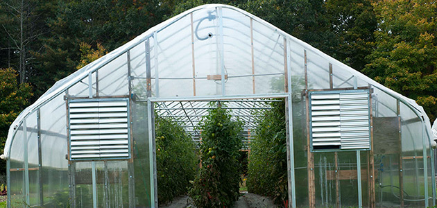 Why Grow In A Greenhouse? Basics & Advantages Of Protected
