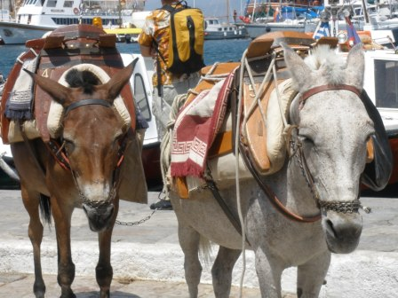 John Ploetz Livin Life Greek Isles Donkeys
