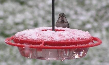 annas-in-snow-f.jpg