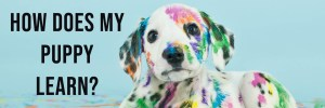 Read more about the article How Does My Puppy Learn?