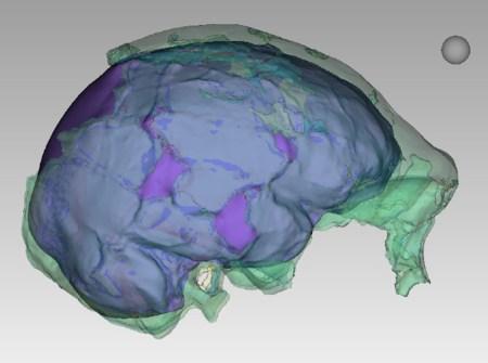 Hawks et al 2017 H naledi endocranial LES1